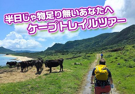 ケープトレイル1日ツアー(上級者向け)