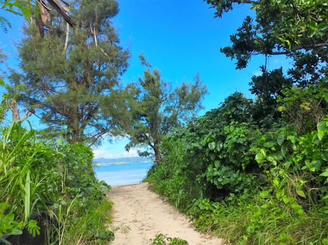 ⑩防風林にはビーチへの入り口がいくつもあります