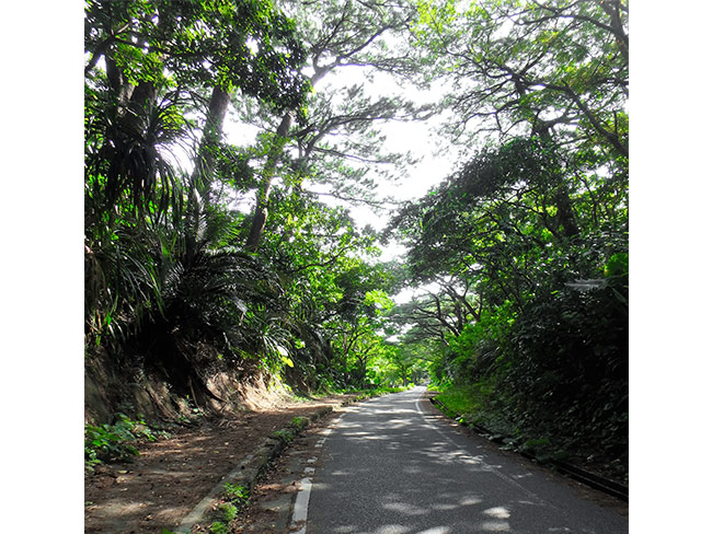 ②緑のトンネルを抜けて崎枝半島へ