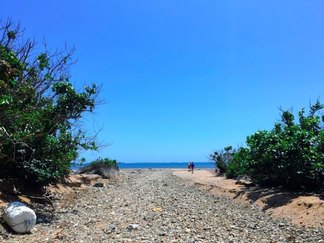 ④ビーチコーミング!貝やサンゴをひろって旅の思い出に