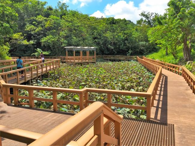 ⑦ヤシ園や果樹園などがあり、1年中亜熱帯の植物を観察できます